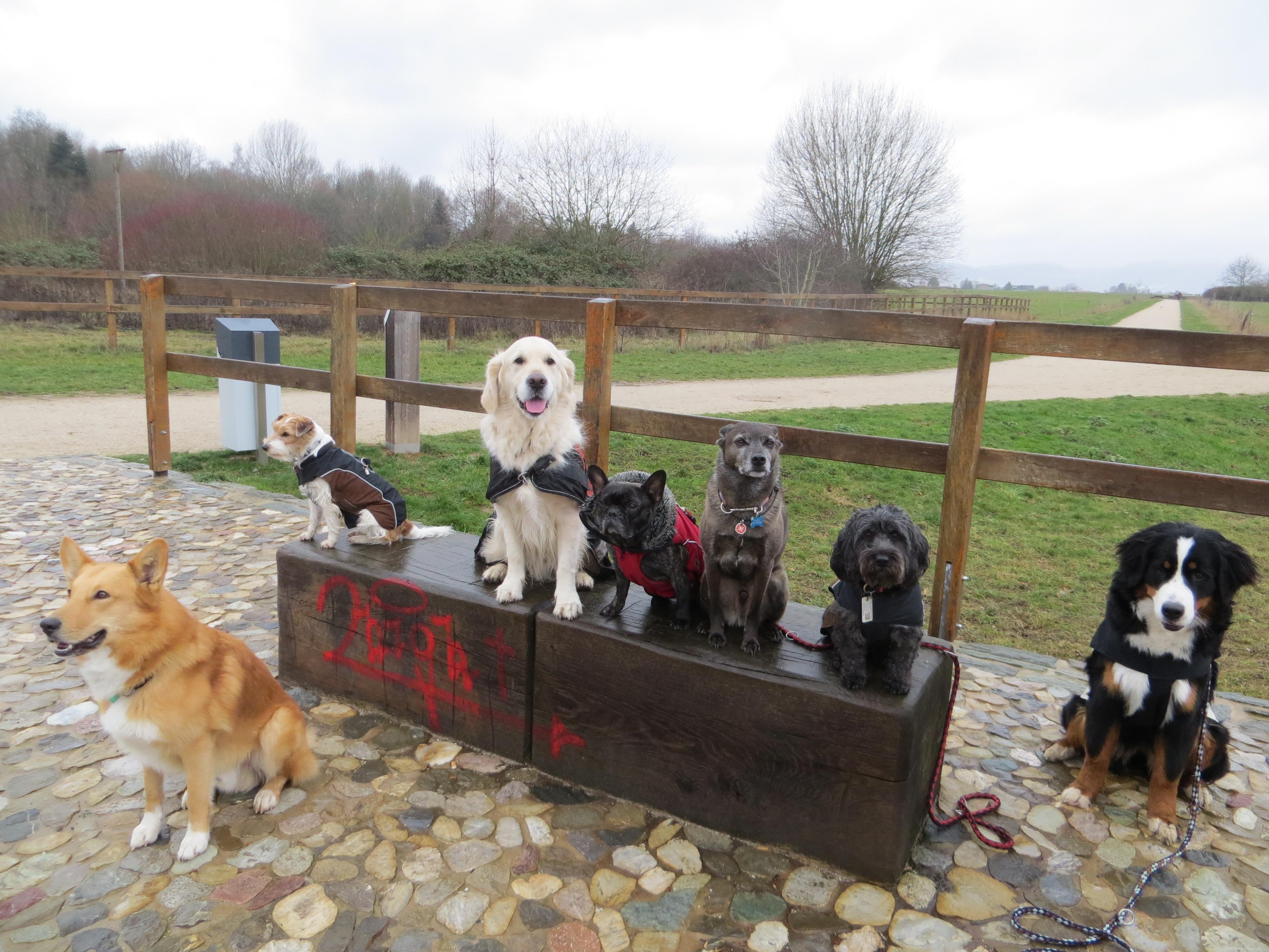 Hundeschule Hessen